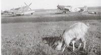 P-51 Mustangs, 301st Fighter Squadron, Ramitelli Aerodrome, Termoli, Italy - 1944