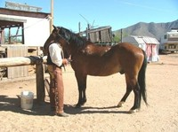'You and Me, DW,' Tony pulling cactus needles out of 'DW' with a set of tweezers. This horse and its rider had two brushes with the cactus on day one. 'DW,' got the worst of it when he stepped on it and bolted with Tony in the saddle head long thru a field of cactus. The 'Boys' kept yelling for Tony to jump off, he never did. No one couldn't say that Tony wasn't brave, but with the abundance of cactus all around them, Tony might have felt safer in the saddle then on his but in a cactus plant.  Bravery had nothing to do with, but pulling 4 inch needles of cactus out of ones hind area had more than a lot to do with it.