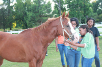 Students groomed and tended to horses at the HU Mallory Street stables as part of the Young Diplomats program.